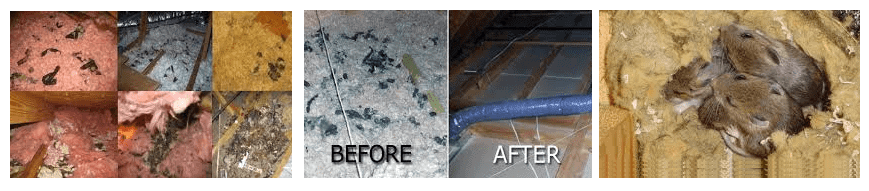 Before After Insulation Removal